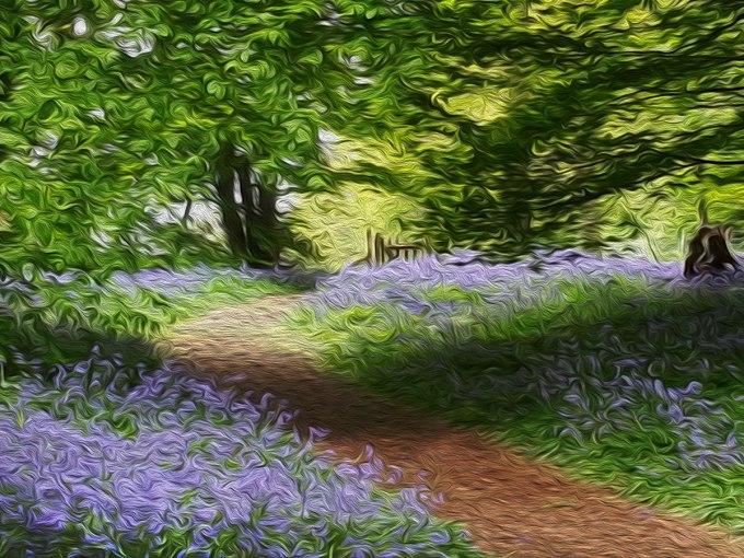 Bluebells wood 2.jpg