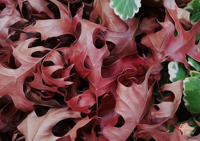 leaves-web